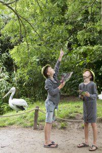baobab-pelikaan-expeditie-zooparc