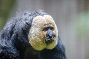 aap-dierennieuws